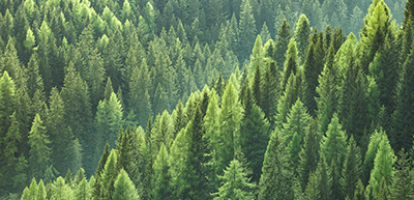 Branching Out: How Canada's Forestry Products Sector is Reshaping its Future